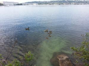 Mom-ashes-ducks