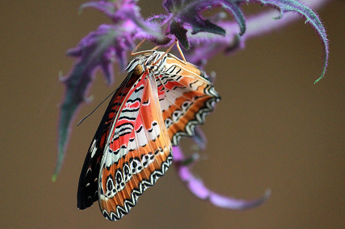 butterfly with purple flower