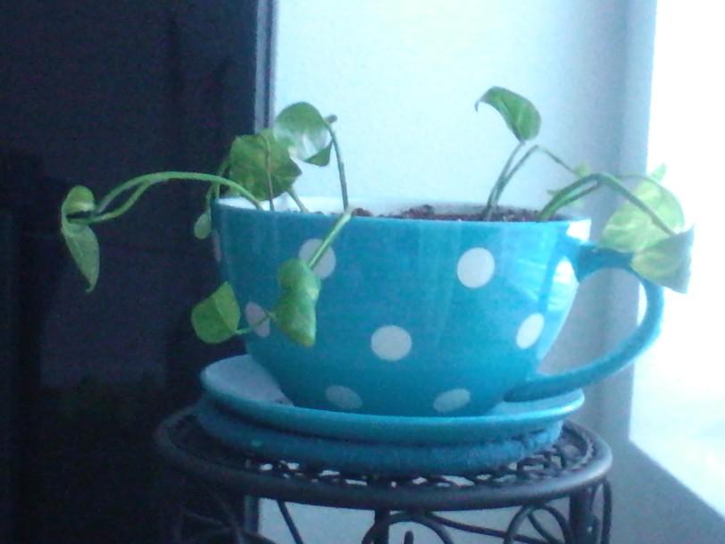 Emma the plant