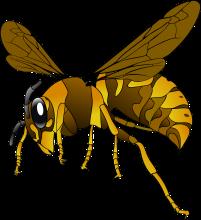 hornet-via pixabay.png